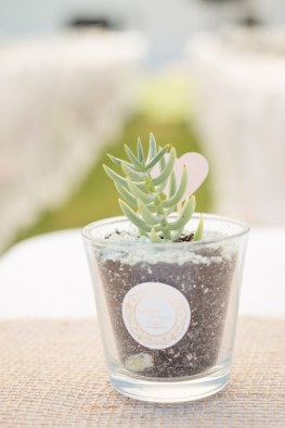 succulentes-cadeau-invités