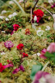 nature-fleurs-pays-basque