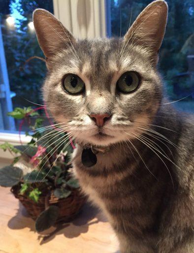 Gracie the cat