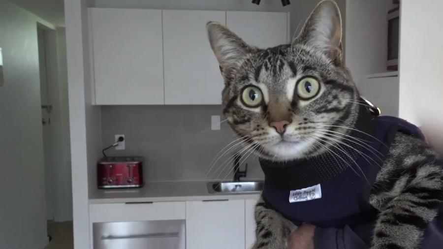 gatto arnold