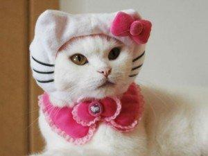 kitty-prin02