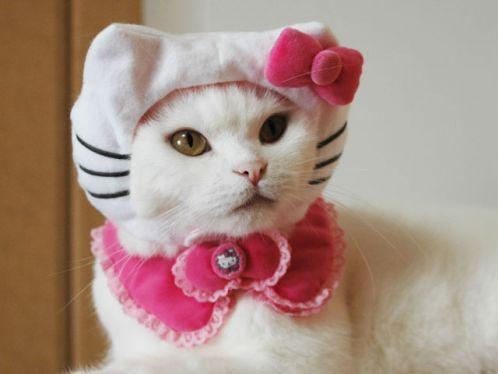 questo gatto è un ossimoro