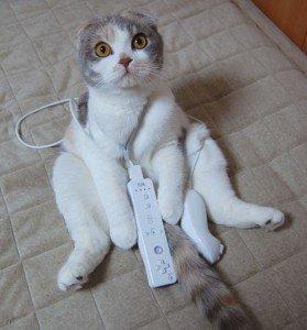 wii_cat