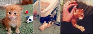 Weekly kitten roundup #4