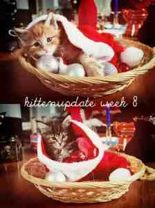 Weekly kitten roundup #8