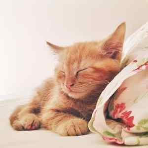 Een non-blogje: kitten cuteness overload