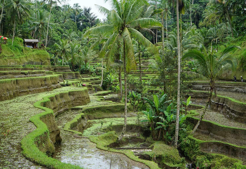Reisverslag Bali deel 1: Canggu & Ubud