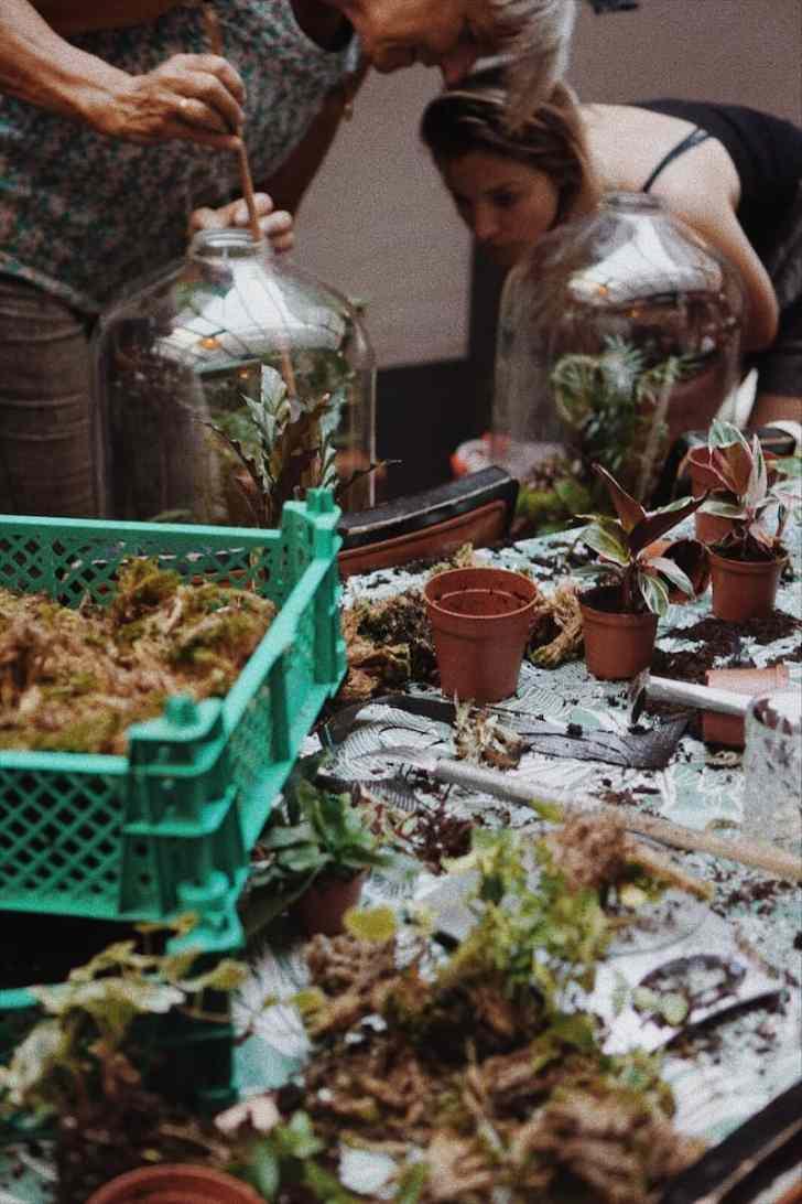 ecosysteem maken