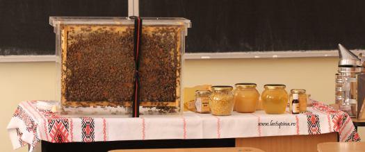 scoala altfel - Micul apicultor