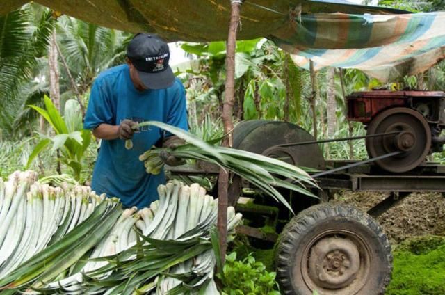 cuire ananas Pinatex