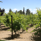 Nevada Wineries? Yes, There are Four and Counting