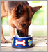 Dog Food Cat Food Recalled in 19 States _20171006043837376-159532