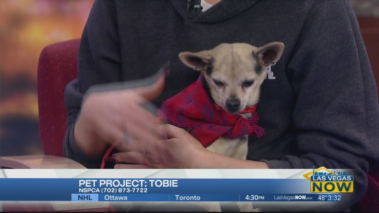 Tobie is this week's Pet Project