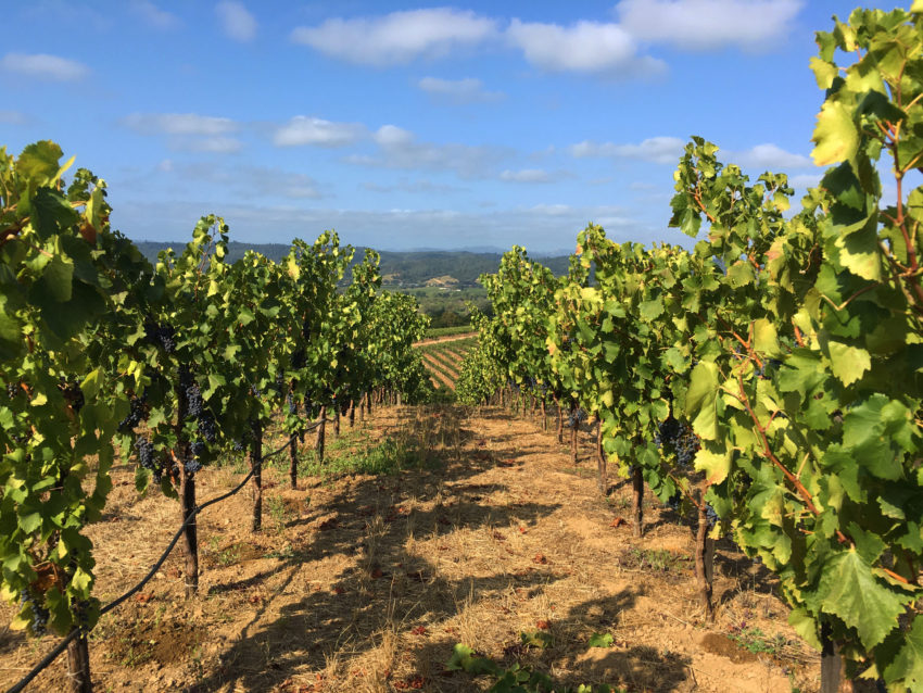 Wineries - LaszloLaw