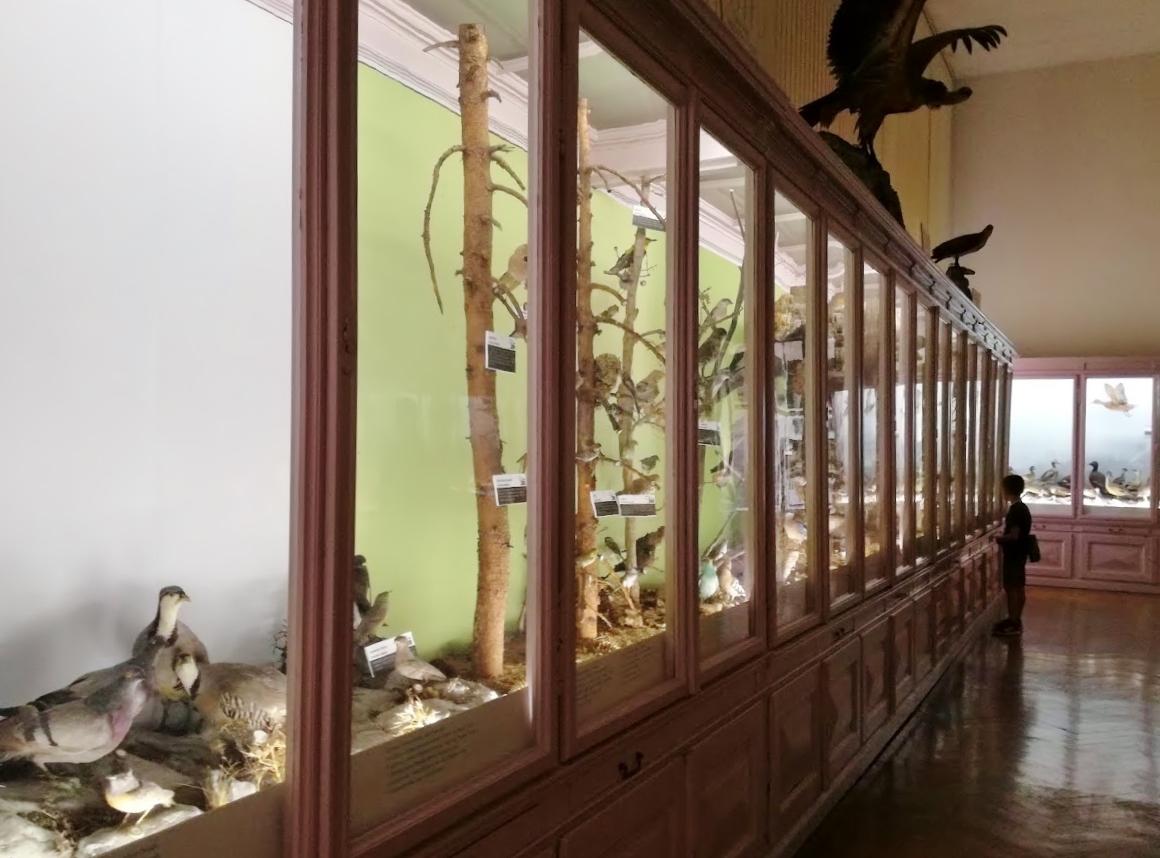 il museo di storia naturale