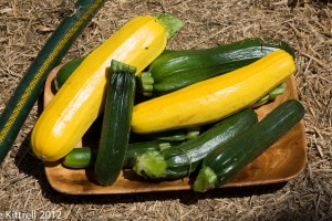 Zucchini Madness – Episode 17!