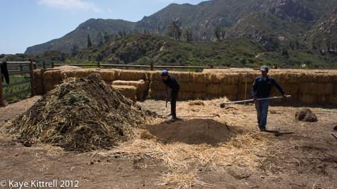 Biodynamic Compost at One Gun Ranch-alfalfa