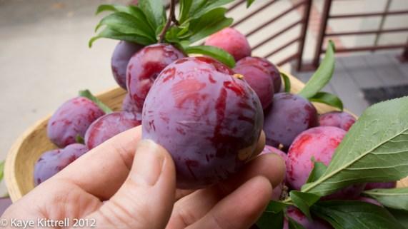 Plum Silly! - ripe plum
