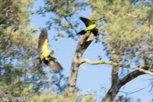 Speaking of Parrots
