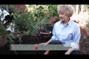 Monarchs and Milkweed – Episode 16