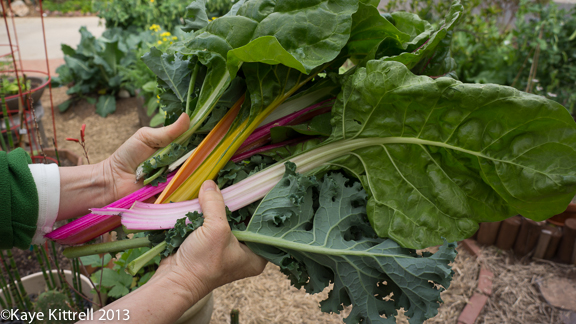 Gardening with Swiss Chard and Kale