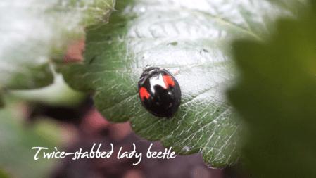 Late Bloomer-Summer Garden Wrap-up-ladybeetle