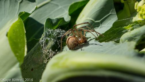 Winter Garden Update-spider