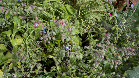 Make it a learning experience-borage