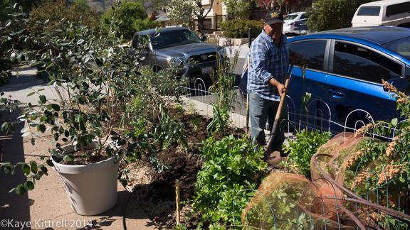 Planting my Parkway Garden