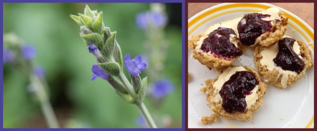 Give it the time of day - lavender, biscuits
