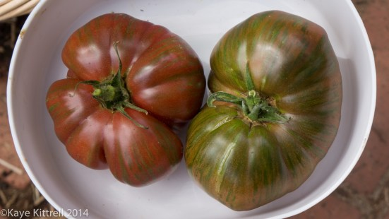 Growing Heirloom Tomatoes Part 4 - tomatoes