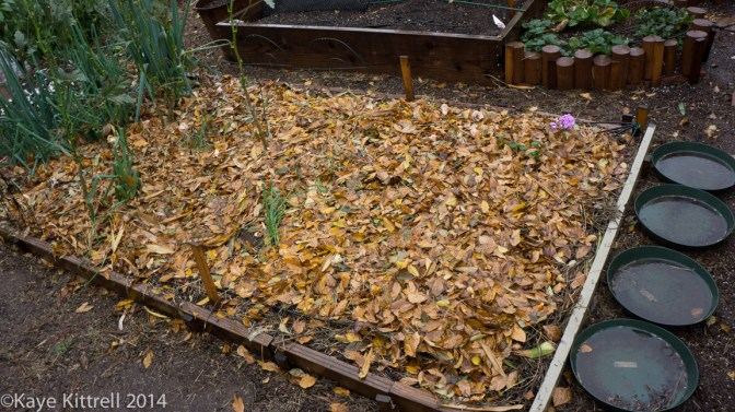 Make the most of the rain event, plant! - leaf mulch