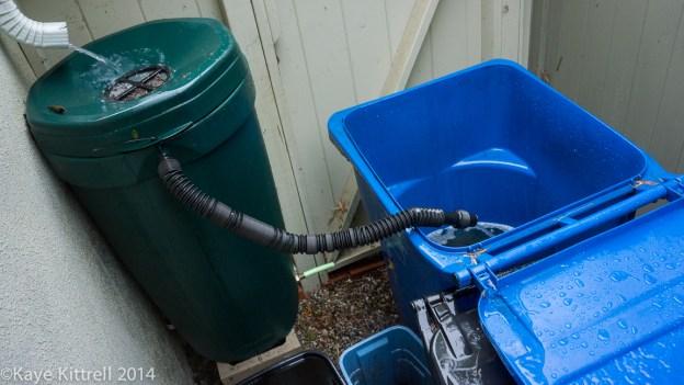 Make the most of the rain event, plant! - rain barrel