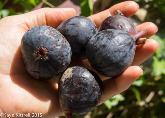 Two 20-minute Farm Box Recipes - figs