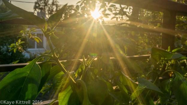 My Slice of Pepper Heaven - sunset