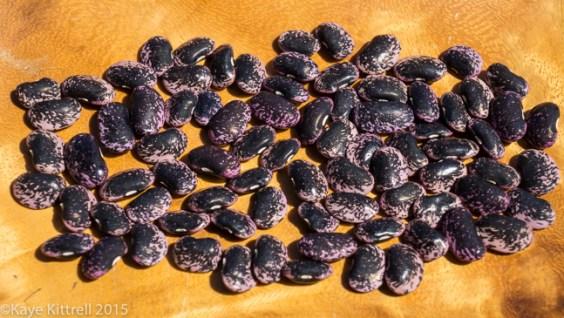 Supreme Scarlet Emperor Beans - harvest