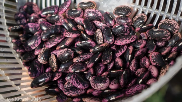 Chili Recipe with Scarlet Runner Beans - beans