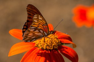 Plant Flowers, Attract Beneficial Insects