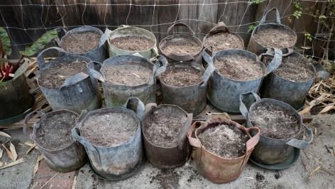 Urban Garden Improvisation - minerals worked in