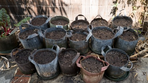 Urban Garden Improvisation - holes for seed