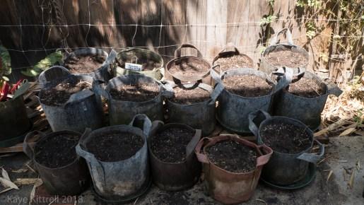 Urban Garden Improvisation - watered pots