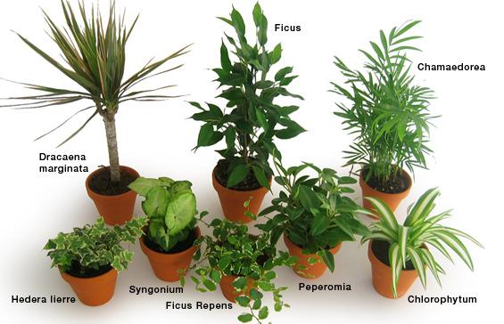 Plantes Zen D Intrieur Latelier Des Fleurs
