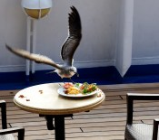 Don't leave your food, not even for a minute. On the Norwegian Sky in the Caribbean.