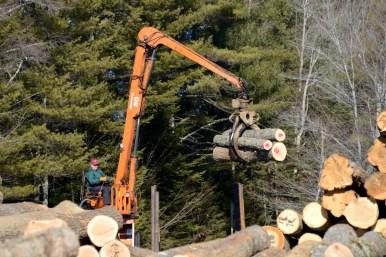 Sorting logs at the veneer yard