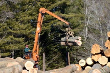Sorting logs at the veneer yard