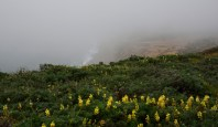 A beach shrouded in fog at Point Reyes.