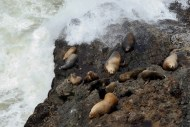 On rock ledges inaccessible to humans, sea lions enjoy the day.