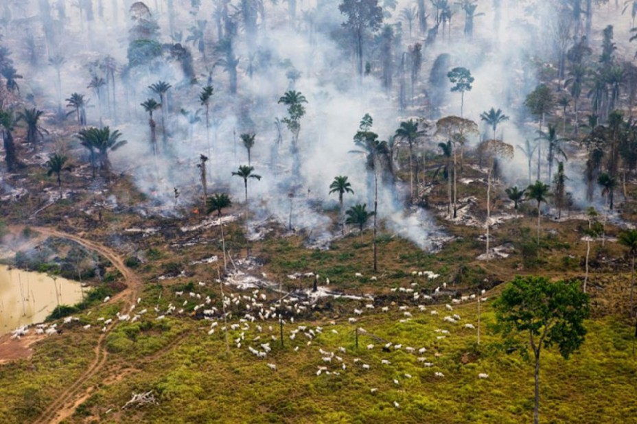 La jungle amazonienne, poumon de la planète
