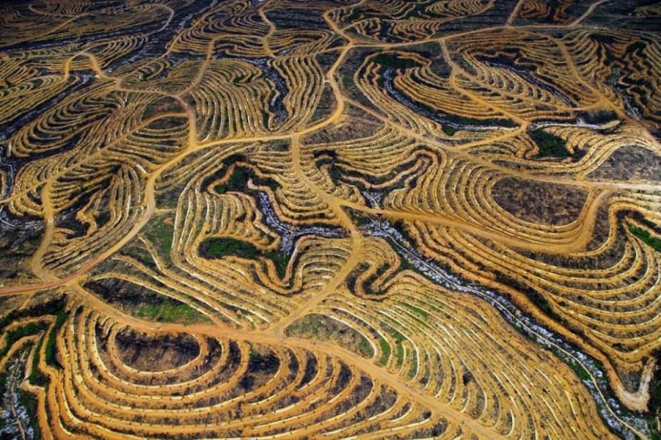 Une forêt indonésienne transformée en plantation de palmiers à huile