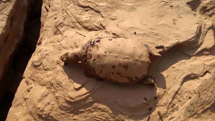 tortue-morte-bresil